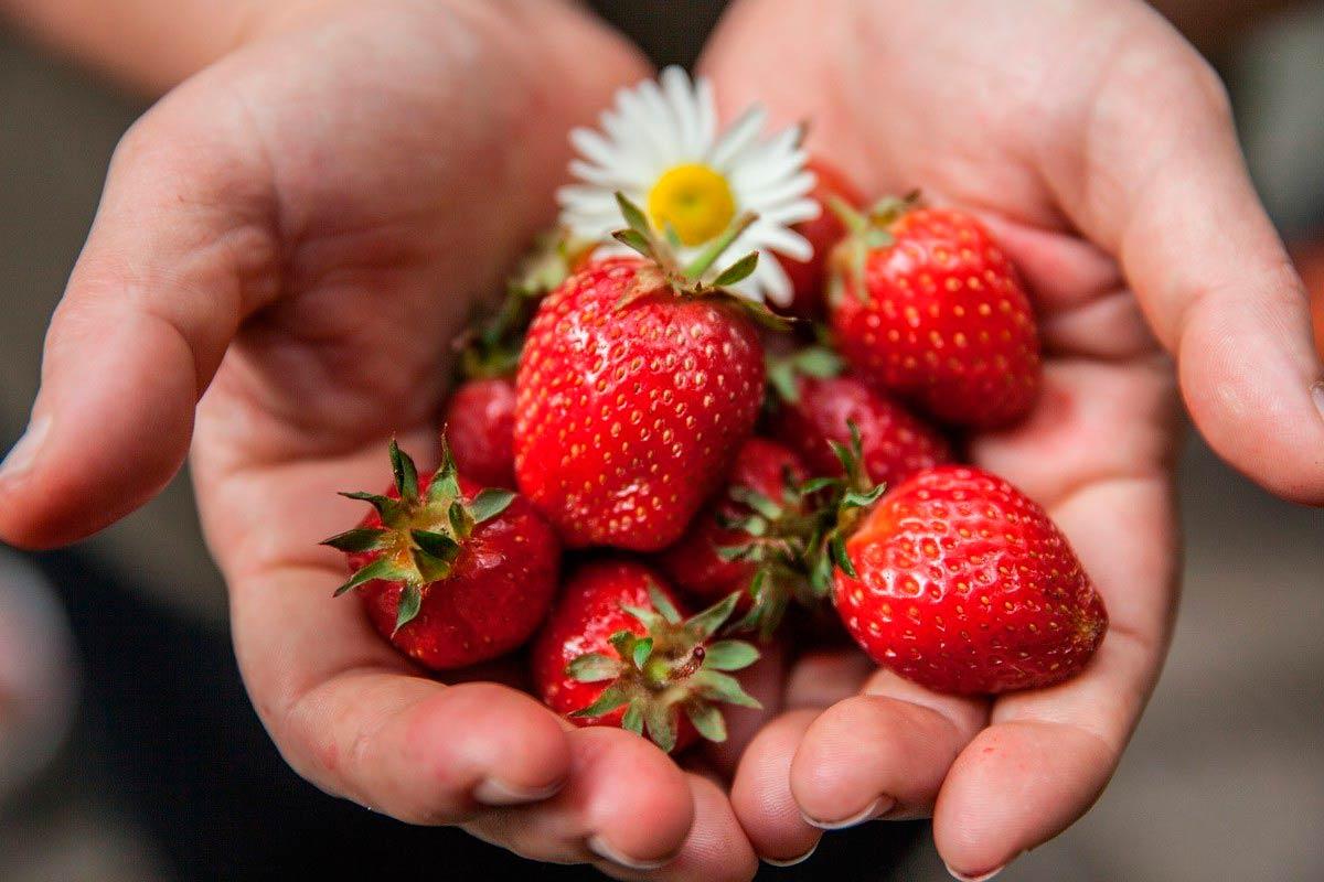 Alimentación saludable y sustentable